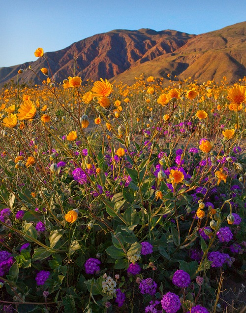 Wildflowers. Colorful landscapes by nature photographer Kevin McNeal