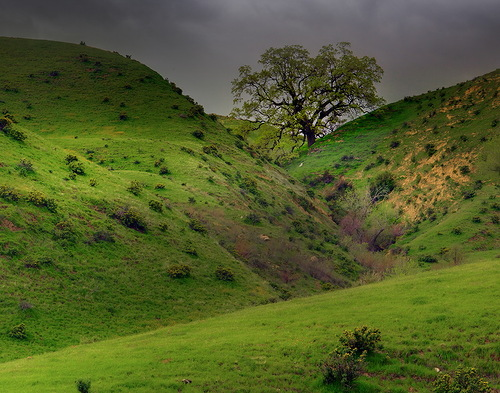 Summer hills by nature photographer Kevin McNeal