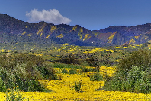 Yellow and green landscape by nature photographer Kevin McNeal