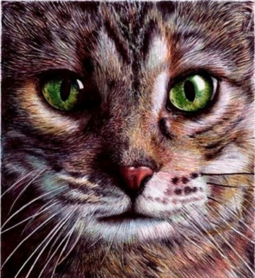 Cat's portrait. Drawing by Portuguese artist Samuel Silva