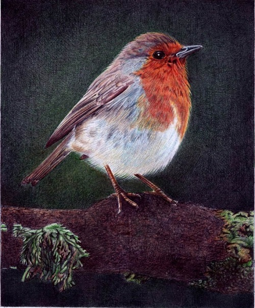 A little bird. Drawing by Portuguese artist Samuel Silva