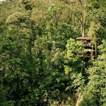 Finca Bellavista – Village of houses in the trees