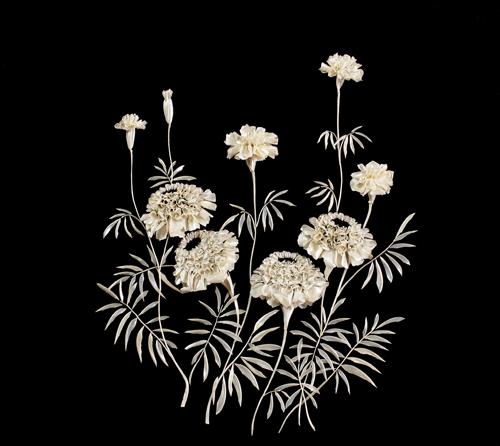 Tagetes (garden flowers)
