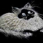 Gray and black kitten