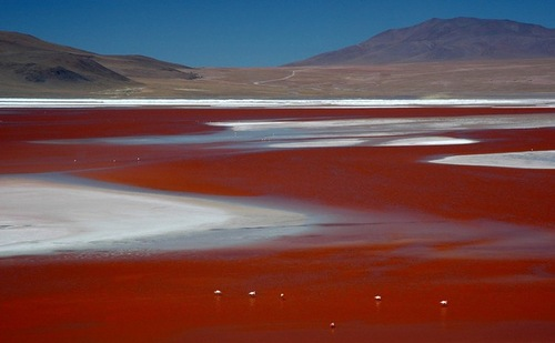 Laguna Colorada. Lakes with water of amazing colors