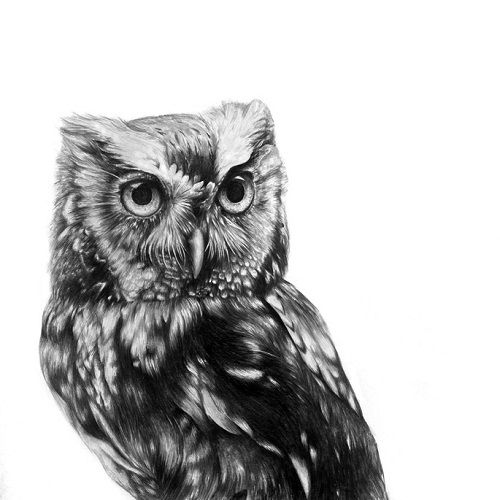 Pencil drawings by Jaimee Paul