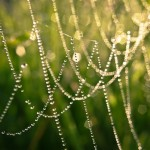 Dew drops on the web by Selena1965
