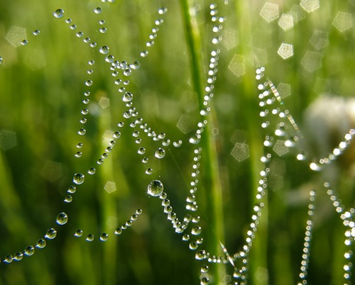 Dew drops on the web photography by Selena1965