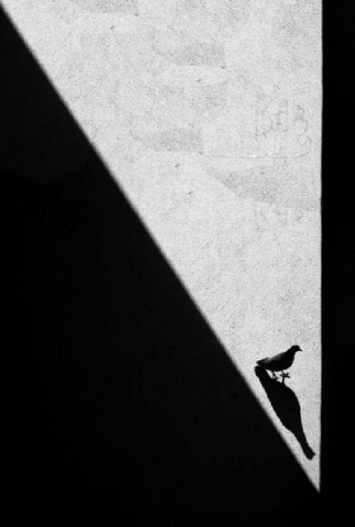Photo by Russian artist Alexei Bednyi