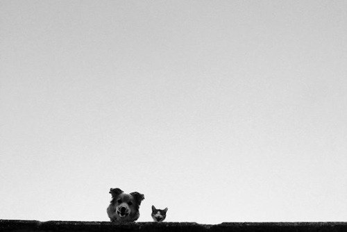 Minimalism in black and white photography by Russian artist Alexei Bednyi