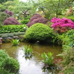 Beautiful ponds