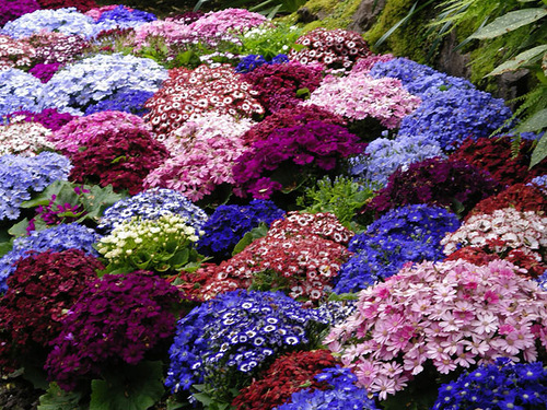 Variety of colors in the Flower Garden
