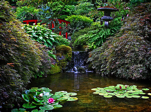 A breathtaking landscape with a pond and water lilies among coniferous trees