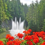Red flowers against fountains