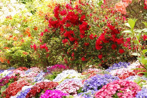 Riot of colors – Flower Garden in Canada