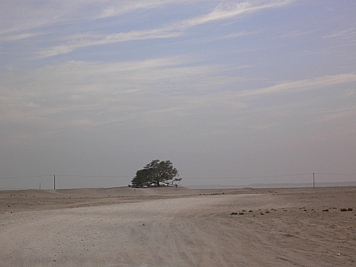Picturesque view of Famous Tree of Life, growing in loneliness in Southern Governorate of Bahrain