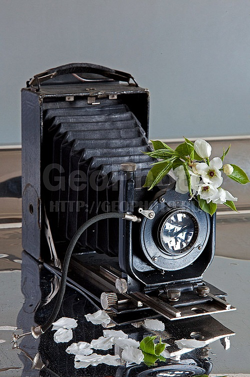 Apple blossoms and Vintage camera. Work by Russian photographer Alexander Knyazev