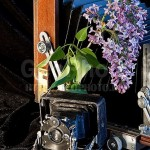 Lilacs and Vintage camera. Work by Russian photographer Alexander Knyazev