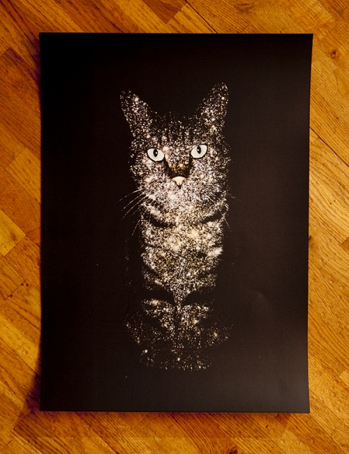 Gorgeous Celestial Cats created by British freelance artist Boya Latumahina (Zippora Lux)