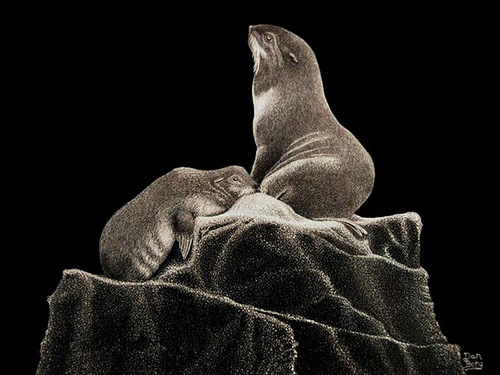 Seals. Scratchboard painting by American artist Dan Berg