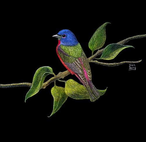 Blue-headed bird. Scratchboard painting by American artist Dan Berg