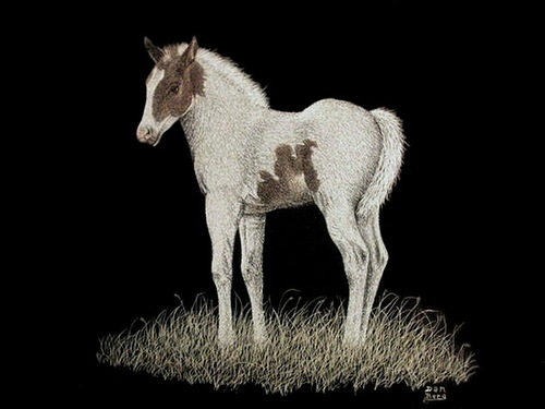 White horse. Scratchboard painting by American artist Dan Berg