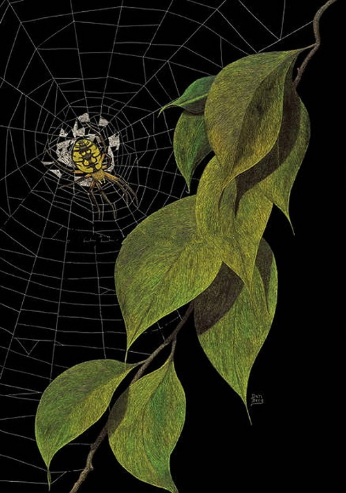 A spider. Scratchboard painting by American artist Dan Berg