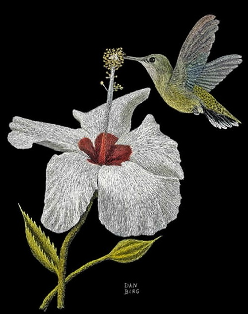 A hummingbird. Scratchboard painting by American artist Dan Berg