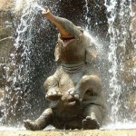 Real life elephant enjoying water