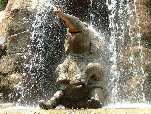 Real life elephant enjoying water