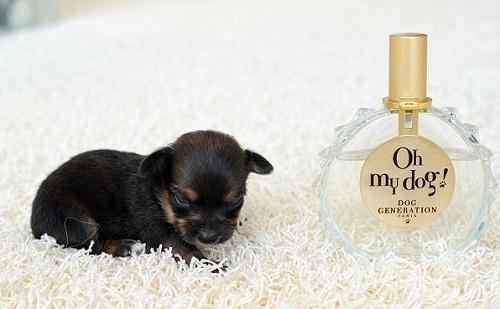 Oh, my God, puppy Mini!