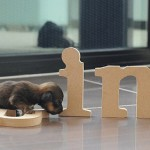 Walking by letters, puppy Mini