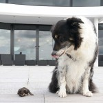 A normal size dog with cute puppy Mini
