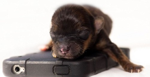 One-of-a-kind puppy Mini