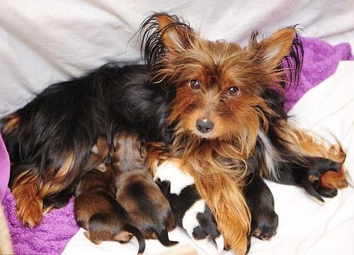 Feeding her puppies
