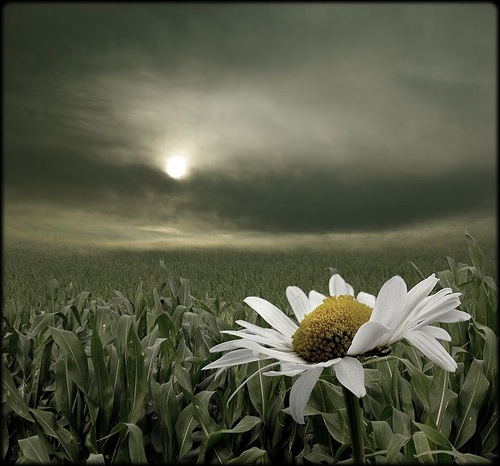Daisy. Photo by German photographer Veronika Pinke