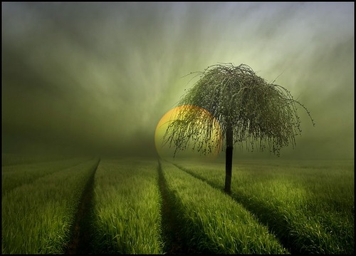 Lonely tree. Photo by Veronika Pinke