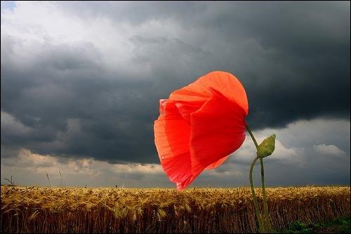 Poppy. Photo by Veronika Pinke