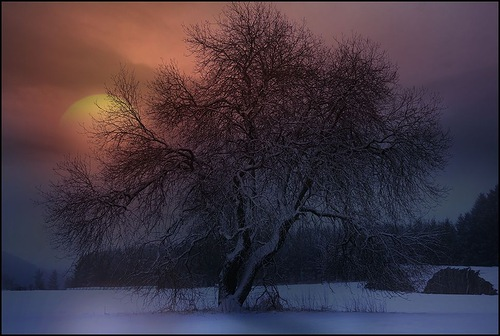 Winter night. Photo by Veronika Pinke