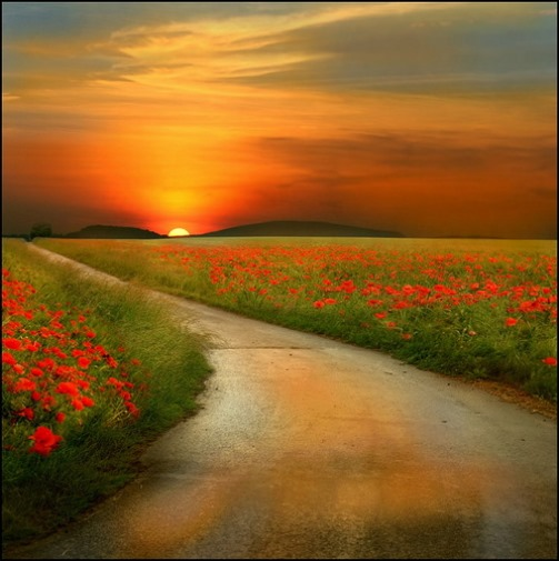 Orange sunset. Photo by Veronika Pinke