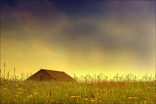 Summer. Photo by Veronika Pinke
