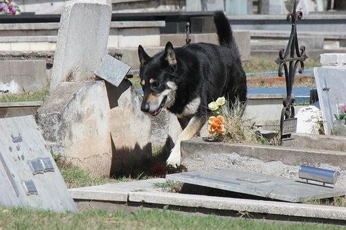 Amazing and sad story of a faithful dog Captain, who lives at his owner's tomb