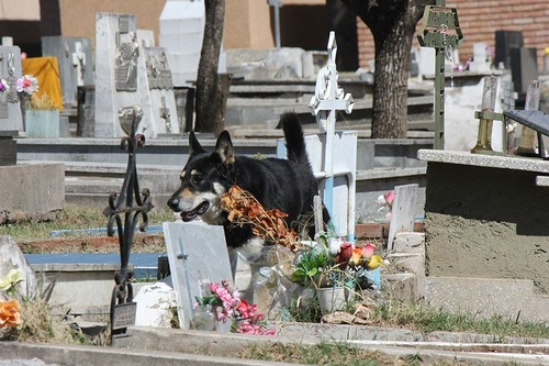 Sitting on the grave of his master, faithful dog Captain, who lives at the cemetery