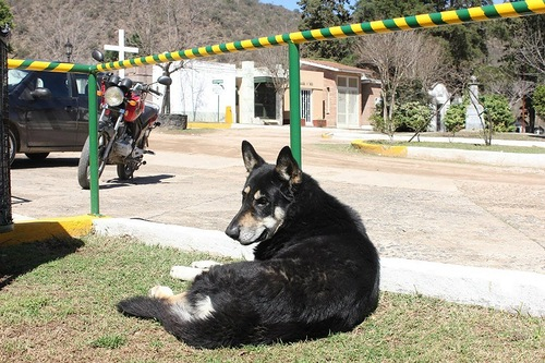 The dog Captain, who never leaves his owner's tomb