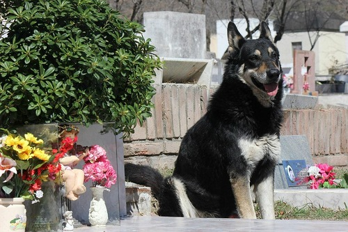 The most faithful dog Captain, who lives at his owner's tomb
