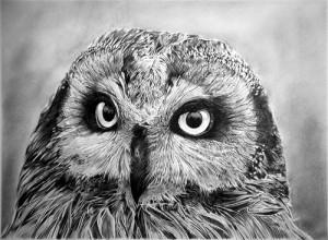 An owl (Beautiful eyes). Hyperrealistic pencil drawing by Italian artist Franco Clun