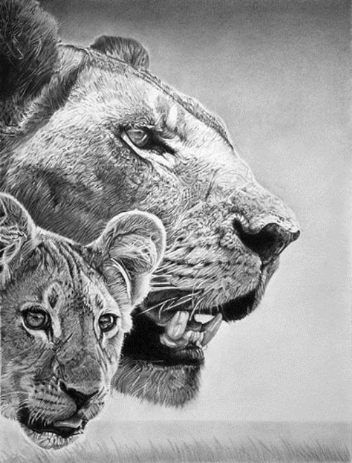 Simba and Sarabi. Hyperrealistic pencil drawing by Italian artist Franco Clun