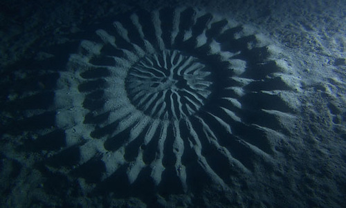The deep sea mysterious circles