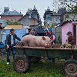 Romanian gypsies living luxury life