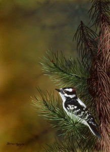 B.C. DOWNY WOODPECKER, Darren Haley